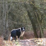 Indulge your dog with a hike through the woods.