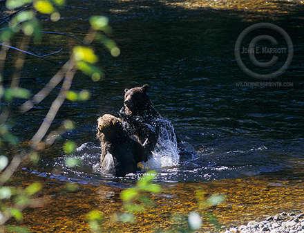 Banff Sightseeing, Wildlife Tours